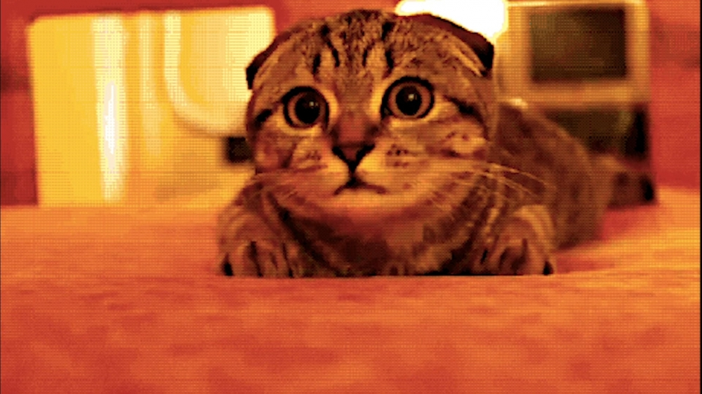 vlipp - Le chat sous le train