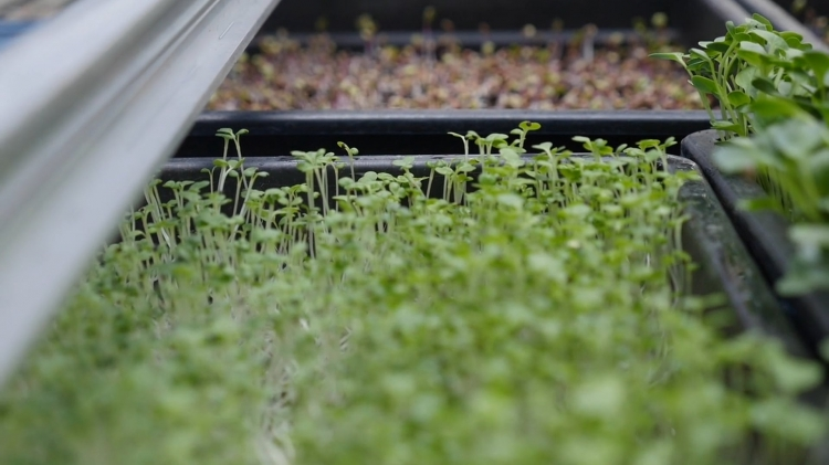 vlipp - Agriculture urbaine : Transition écolo ou greenwashing ?